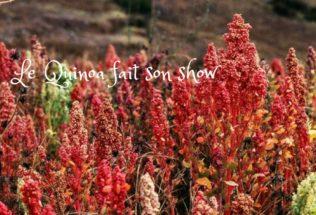 Le Quinoa fait son Show !!
