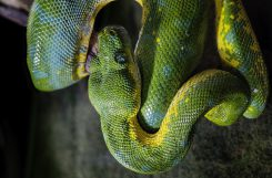 Le Serpent : Animal mon miroir !
