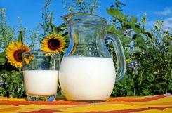 Idée reçue..ou pas. Faut-il boire du lait pour avoir les os solides ?